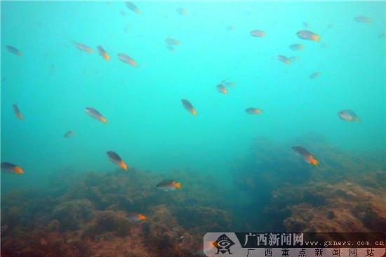 首页 旅游指南 出游指南 涠洲岛潜水哪里好  五光十色的珊瑚,百岁的大